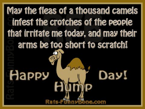 Camel Hump day humor | ... camel and the humorous saying would give you a good laugh happy hump