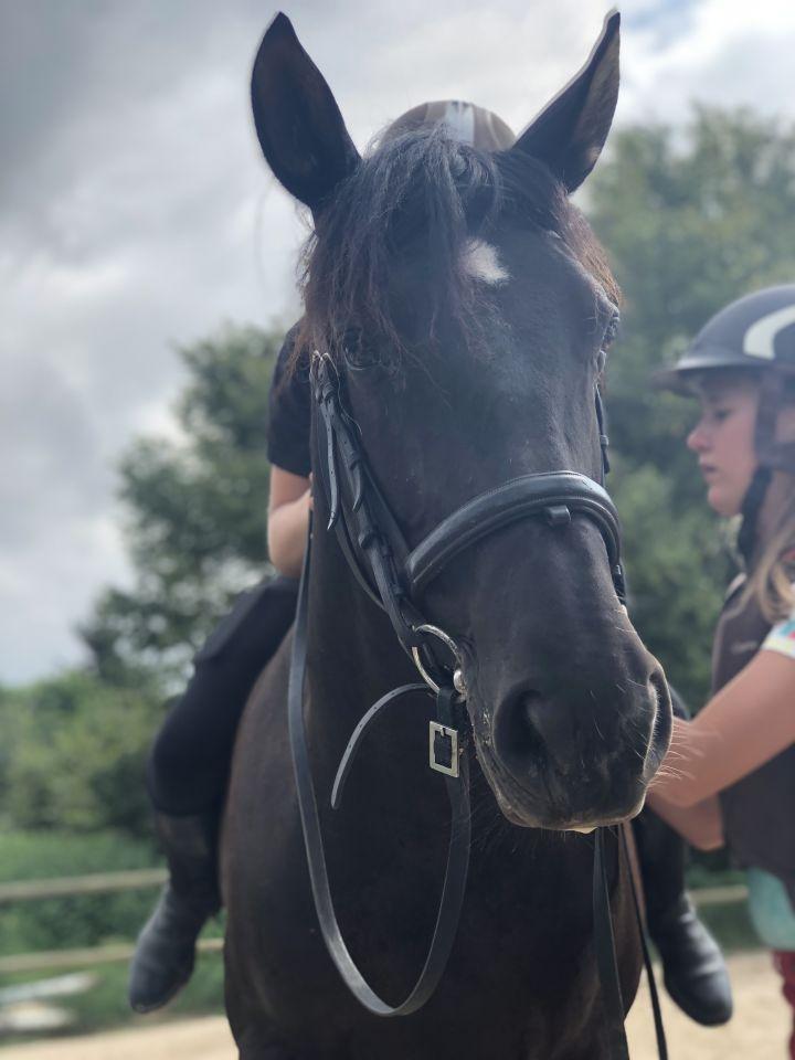 Epingle Sur Horses