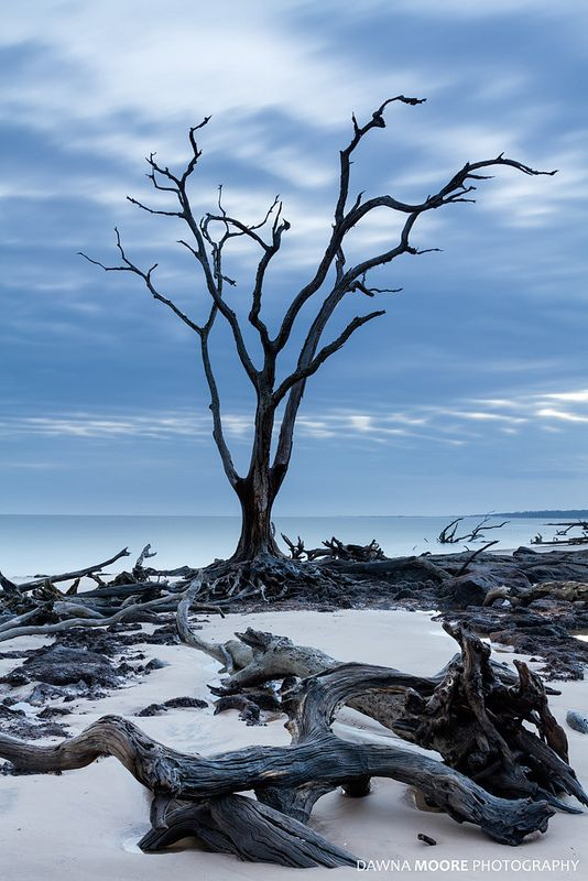 The Sentinel - Blackrock Beach, Big Talbot Island, Florida