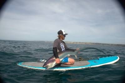 Wanna Catch A Shark On A Paddle Board This Guy Did
