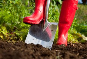 """Gardening—I garden """"for the health of it""""—connecting with the soil brings me inner peace, connects me with fresh food, and helps me a build a personal oasis in my yard."""
