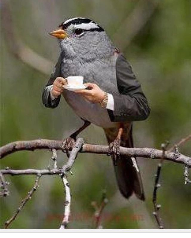 Taking my first cup of coffe, when I'im listen to my other kind gentle friends.