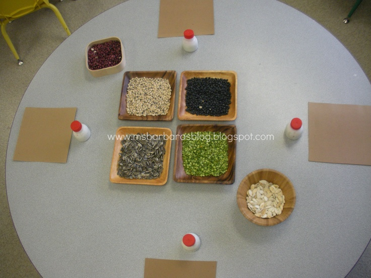 Seed/Bean Art provocation
