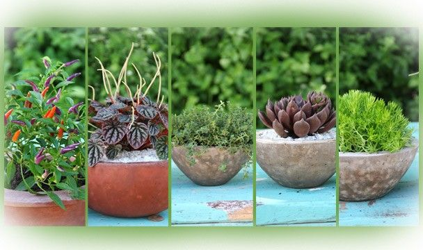 Keep it contained : Gardening : The Home Channel