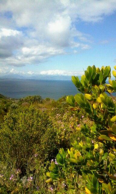 False Bay, Western Cape.