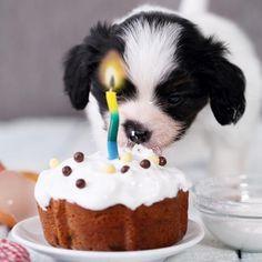 Recetas de tartas para perros. ¿Se acerca el cumpleaños de tu perrito y quieres hacerle algo especial? Ponte manos a la obra en la cocina y prepárale una tarta especial. Le gustará tanto que, si...