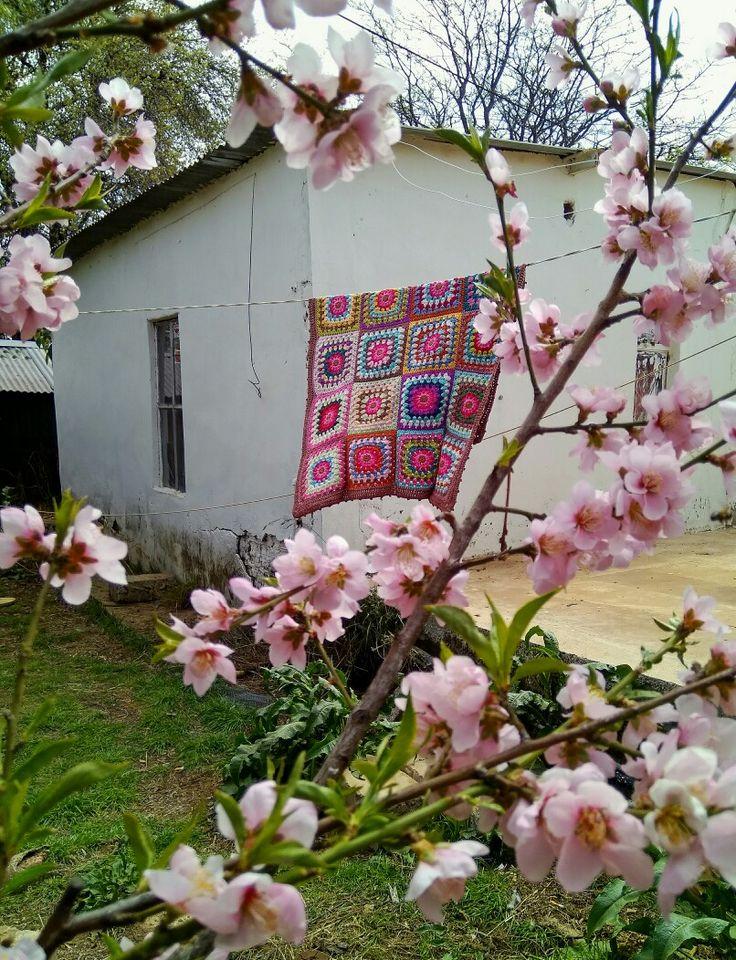 My back yard