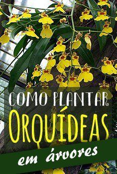 Como plantar orquídeas em árvores. Foto de Heather Cowper #orquidea #arvore…