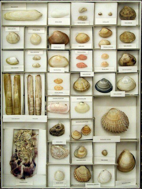 Oggetti esposti al di Museo Storia Naturale, Venezia