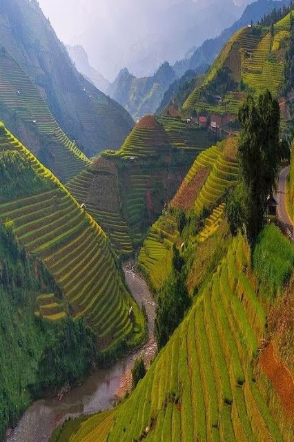 Terrace farming...WOW.