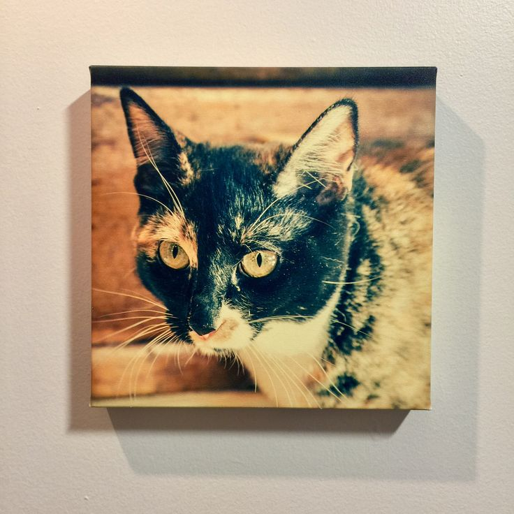 Our cat photo printed on canvas, 1-1/2 inch thick-bar, 12x12 inch (square format) Print your own pet photos on canvas for only $95.80 #PhotoOnCanvas #CanvasPrint #PrintOnCanvas #PictureOnCanvas #ArchivalPrints #BurnabyPhotoOnCanvas #VancouverPhotoOnCanvas #AbcFineArt