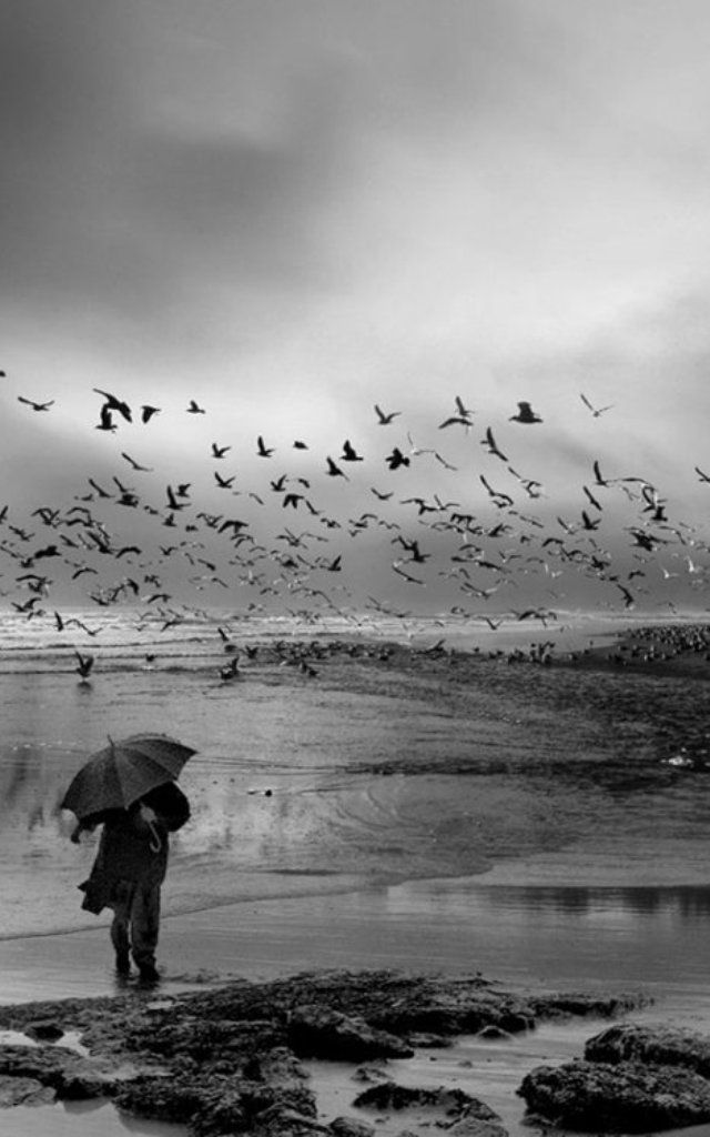 #179) WRITERS PROMPT:The wind howled at my back. Birds, though I have no idea what kind of birds, flew west in droves. In less than ten minutes I would be...