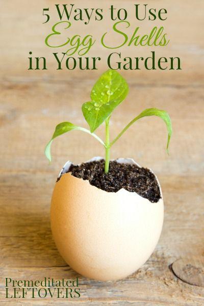 5 Ways to Use Egg Shells in Your Garden #gardening #gardentips #dan330 http://livedan330.com/2015/02/28/5-ways-to-use-egg-shells-in-your-garden/