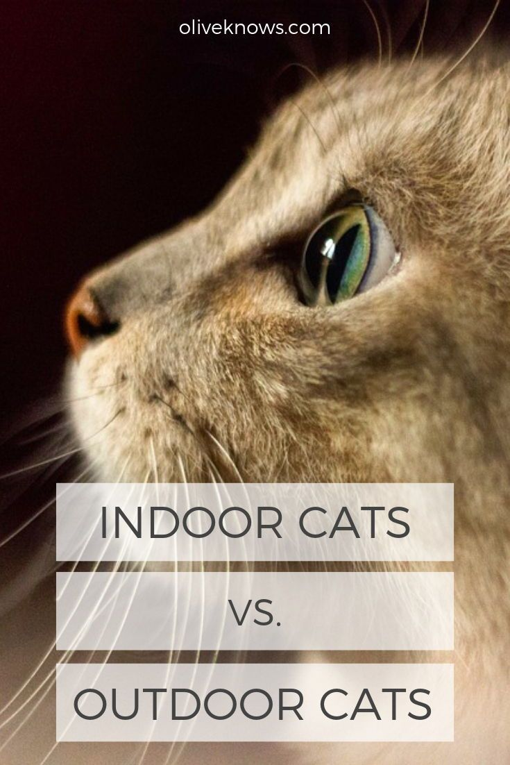 Indoor Cats Vs Outdoor Cats Which Should You Have Oliveknows Indoor Cat Inside Cat Outdoor Cats