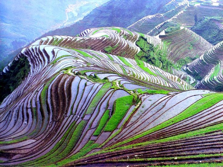 Rice terraces baguio travel pinterest around the for 100 rice terrace drive columbia sc