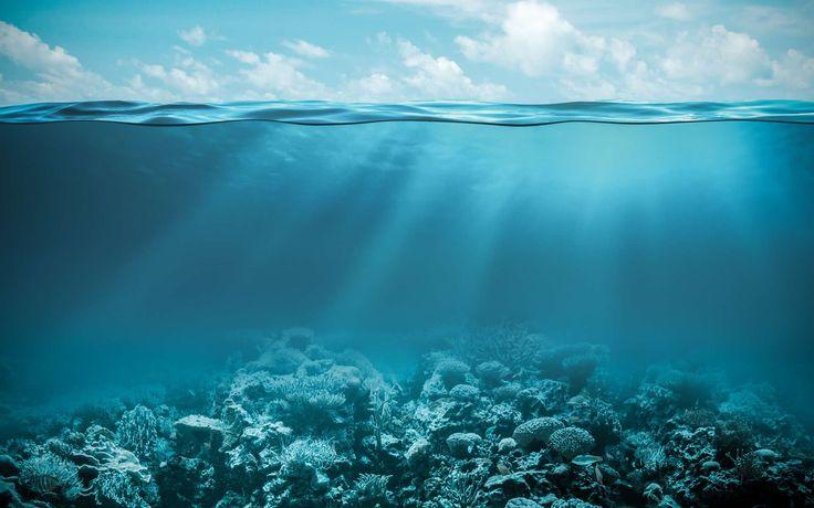 Un poulpe géant filmé en train de dévorer une méduse Un poulpe géant des abysses a pu être filmé à près de 400 m de profondeur. Il avait, entre ses tentacules, un curieux reste de repas : une grande... http://www.futura-sciences.com/planete/actualites/zoologie-poulpe-geant-filme-train-devorer-meduse-66835/#xtor=RSS-8