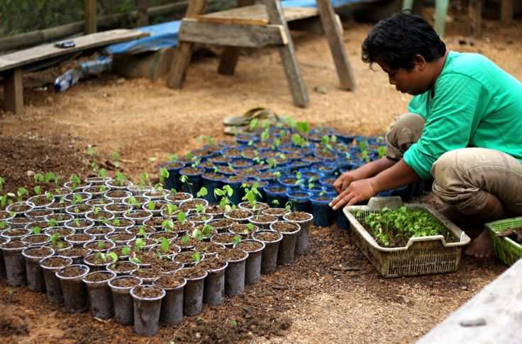 OIC Restoration trial with recyclable pots for seedlings