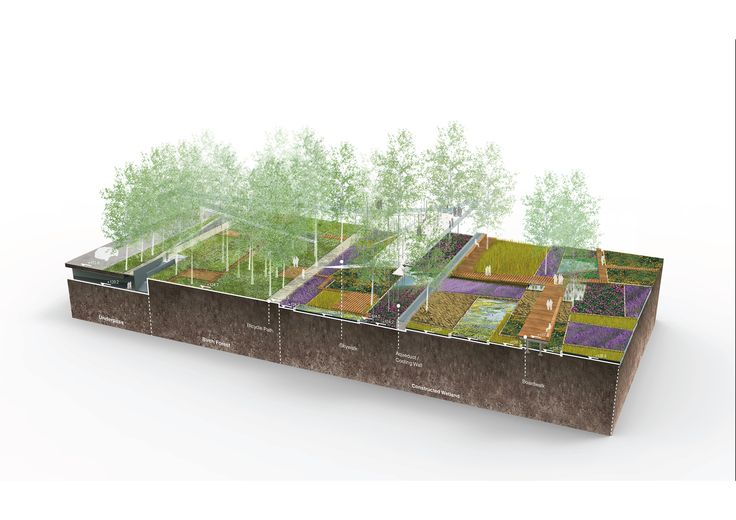 1-constructed_wetland_and_birch_forest.jpg (2000×1414)