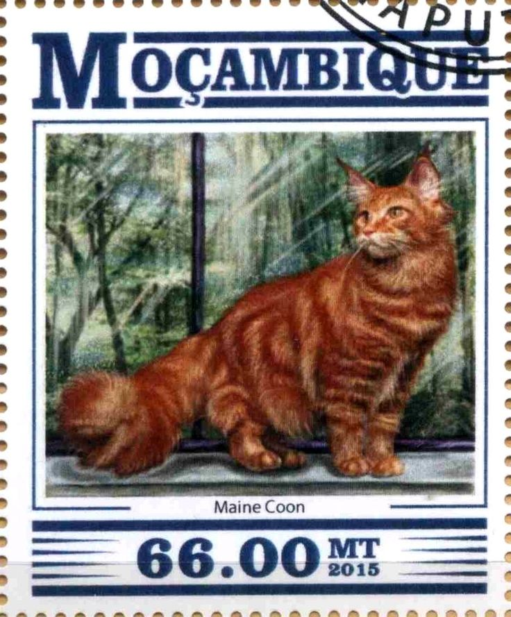 Stamp: Maine Coon (Mozambique) Col:MZ 15307a3