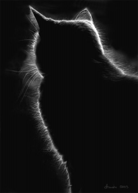 ☾ Midnight Dreams ☽ dreamy & dramatic black and white photography - Cat Halo