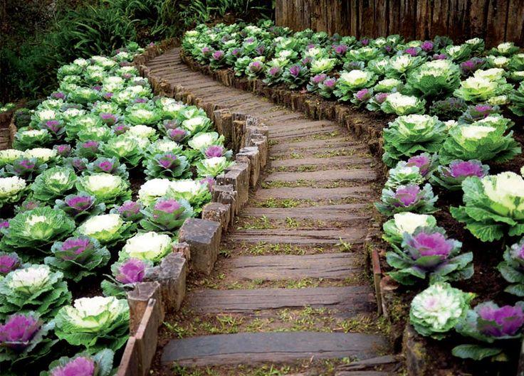 планировка цветочного ландшафта - Поиск в Google