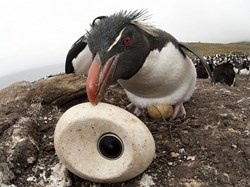 Penguin 'spy' cams help BBC filmmakers create a fascinating documentary: Digital Photography Review