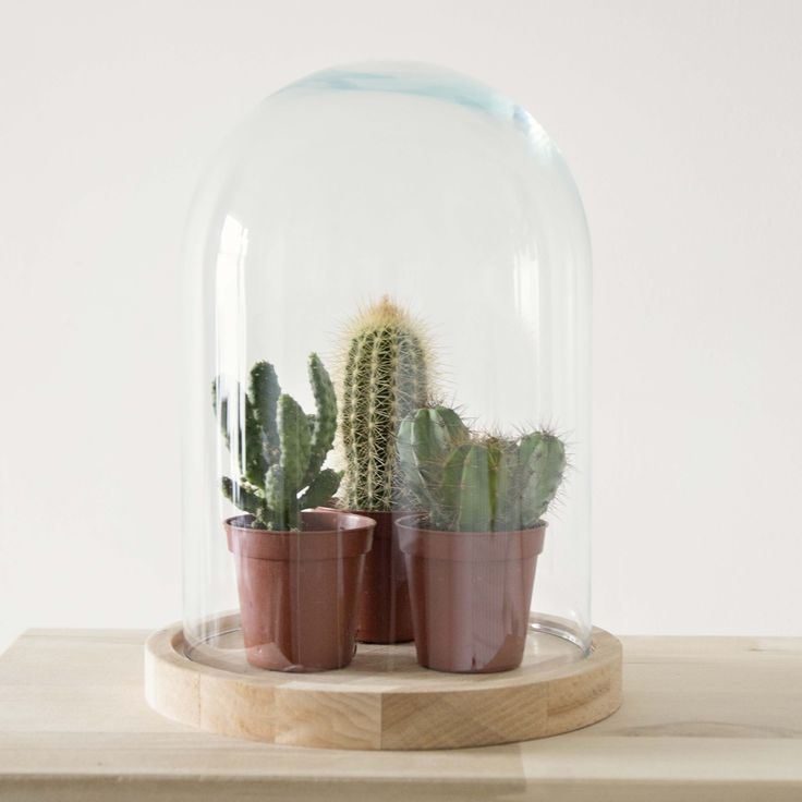 Stolp met kleine cactus.