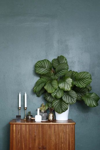 Mid-century style sideboard | perfectly curated credenza with a rubber leaf plant | teal wall paint | brass pineapple and brass candlesticks