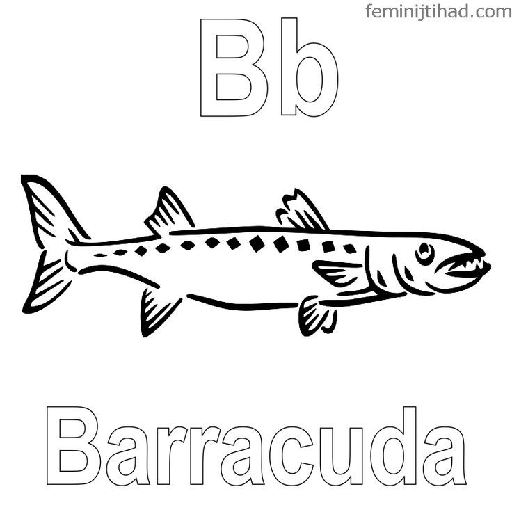Barracuda Fish Coloring Web Page Barracuda Coloring Fish