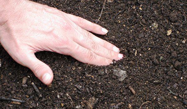 Кислотность почвы - очень важный параметр в садоводстве.