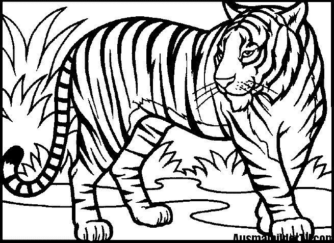 Tiger Ausmalbilder Ausmalbilder Tiere Malbuch Vorlagen Tiere Zum Ausmalen