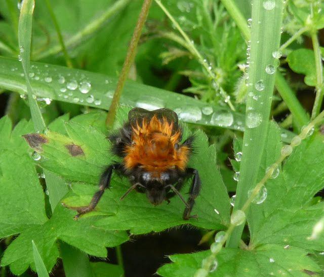 Jemina Staalon multimediavakka: Mehiläisiä! Sammakon kokoisia, marsun värisiä... 09.12
