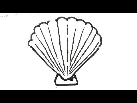 how to draw a shell step by step easy