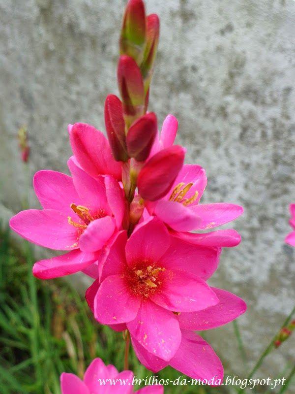 Brilhos da Moda: Flores, uma maravilha da natureza # 33