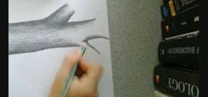 How to Draw a tree using pencil « Drawing & Illustration