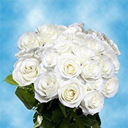 75 Fresh Cut White Roses for Valentine's Day | Tibet Roses | Fresh Flowers Express Delivery | The Perfect Valentine's Day Gift