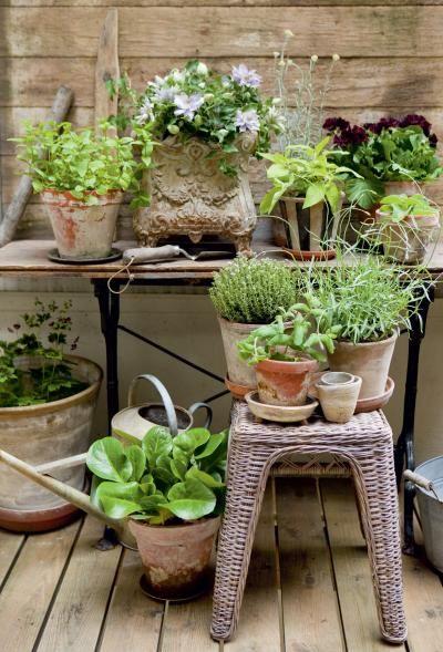 Ylähyllyllä minttuja, enkelinkello, pelargoni, curry-yrtti ja yrttiliisukka. Jakkaralla timjami, laventeli sekä minttu. Alimpana herttavuorenkilpeä ja tummaa kurjenpolvea.   Makuja ruukkujen täydeltä   Koti ja puutarha