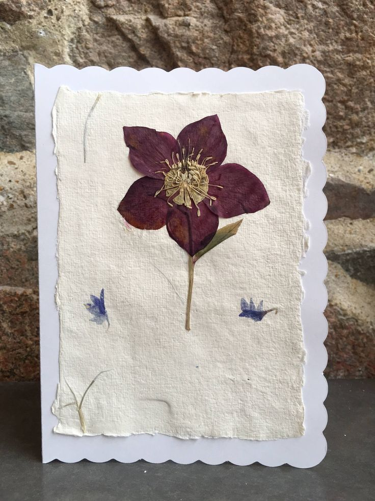Beautiful Pressed Hellebore Flower Card / Recycled Paper / White Card / Greetings card for all occasions - CloeCard by CloeCards on Etsy