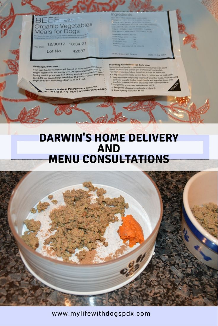 Home Delivery & Menu Consults: Q&A with Darwin's #ad | My Life with Dogs - My Life with Dogs