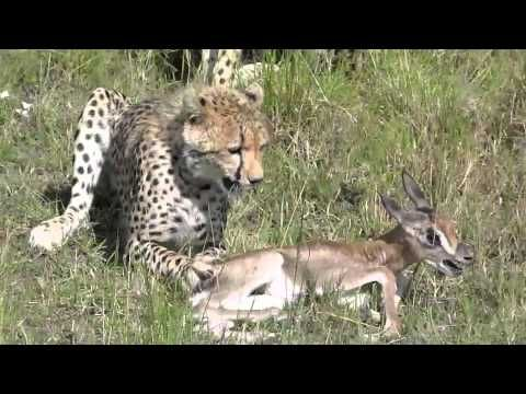 Kenya: Masai Mara Part 1 - YouTube