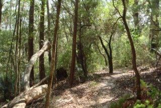 A partly shaded walking track through coastal bushland on Fraser Island.