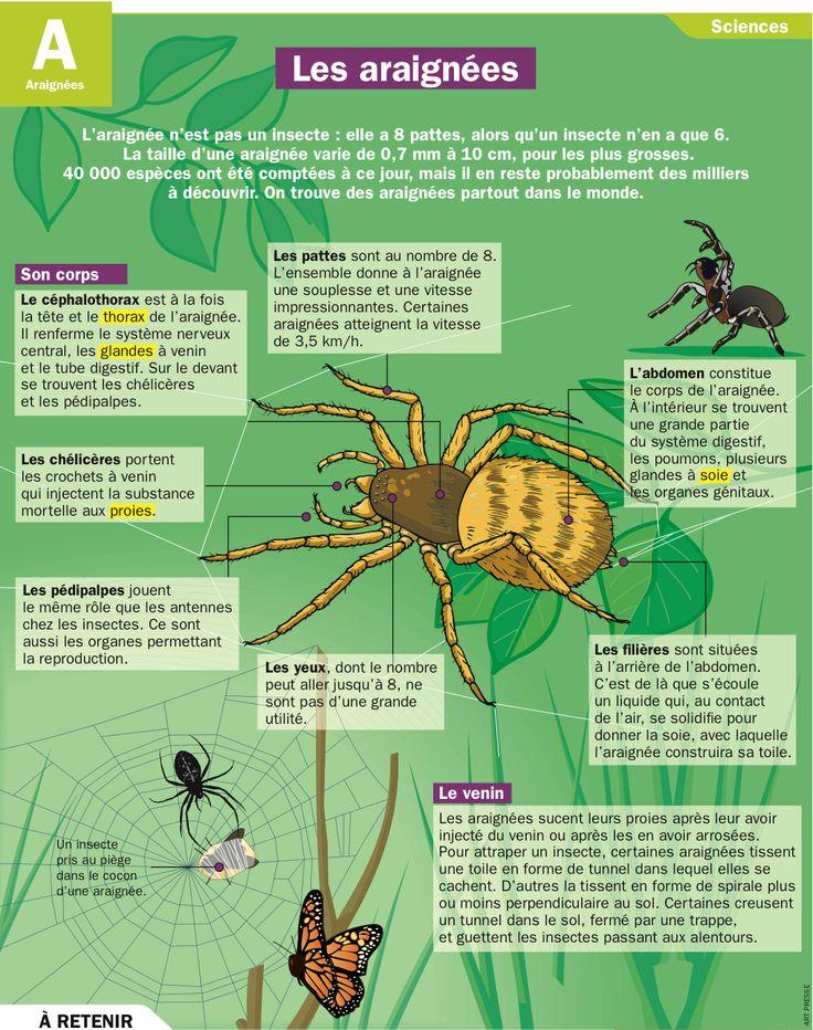 les 25 meilleures id es de la cat gorie araign es sur pinterest bogues animal de compagnie. Black Bedroom Furniture Sets. Home Design Ideas