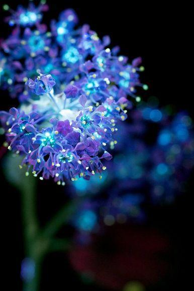 Крэг Барроуз изЮжной Калифорнии занимается фотографией уже семь лет. Солидная часть его портфолио состоит измакроснимков цветков, освещенных ультрафиолетом.