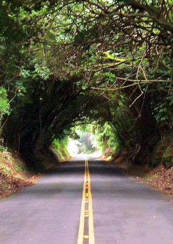 The Old Pali Highway on Oahu, Hawaii.