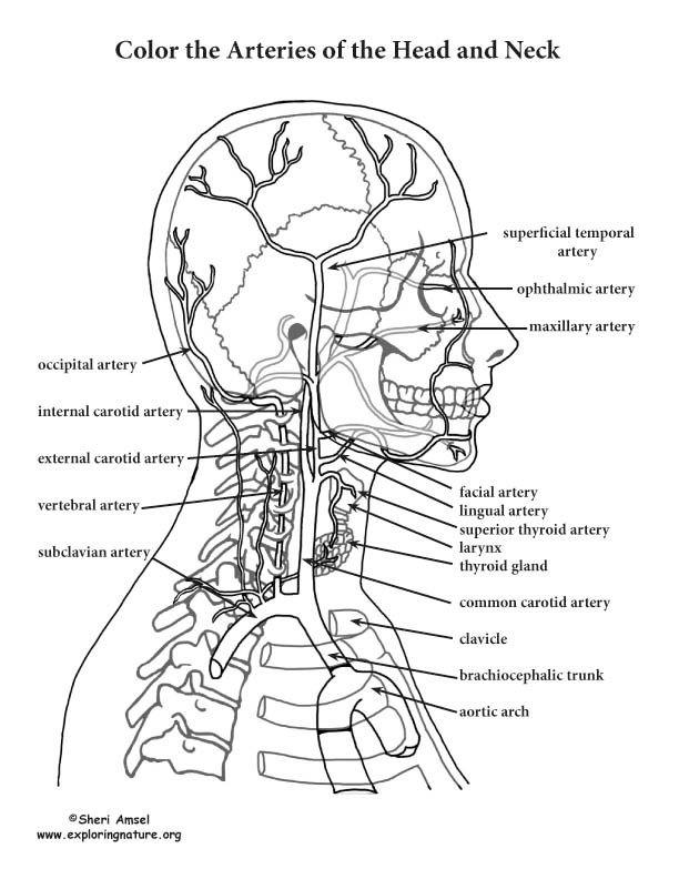 Mejores 17 imágenes de Bodies en Pinterest | Anatomía humana ...