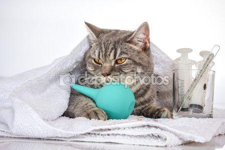 Больные кошки на столе с лекарствами — Стоковое фото © kulkann #119424364