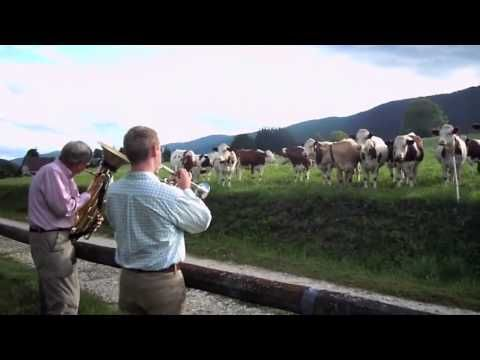 Jazz for Cows - @Natasha Stoodley - LO just sent this out in an email!!