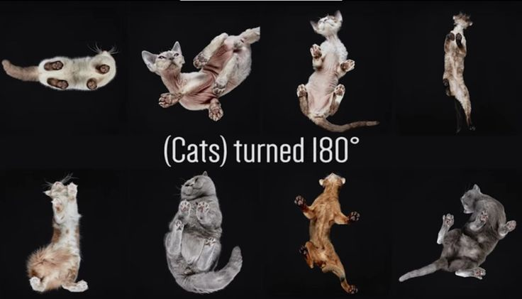 """The project called, """"(Cats) Turned 180°,"""" was accomplished by putting cats on a glass table. It shows a side of the cute felines that is rarely seen on camera. 