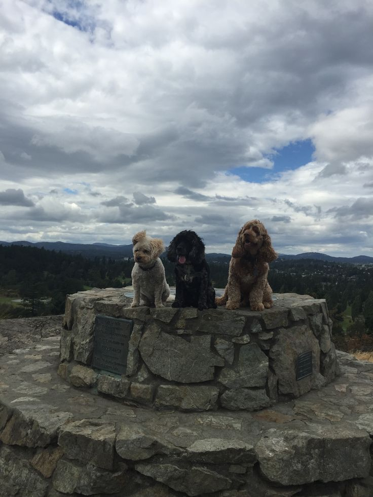 Hikes on a windy day!