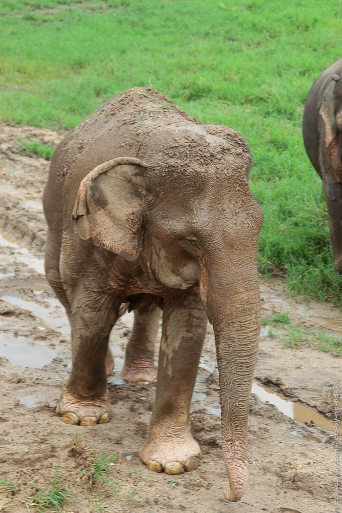 Impressions from the Elephant Nature Park in #Thailand #ChiangMai. A Place that you have to visit more than one time!